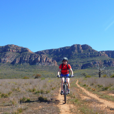 McLaren Vale Bike and Wine Tour for Two