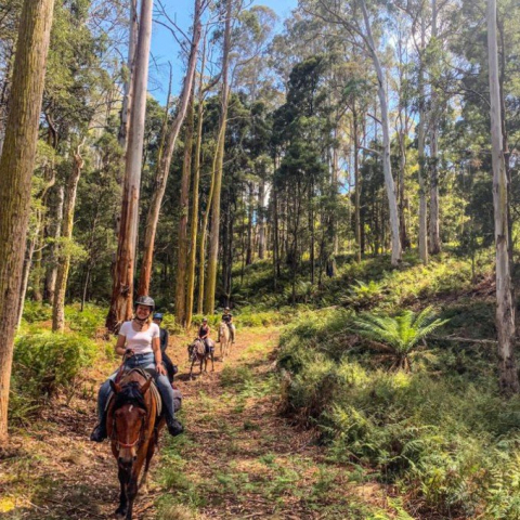Two Hour Horse Riding for Two in the Heart of Cradle Country